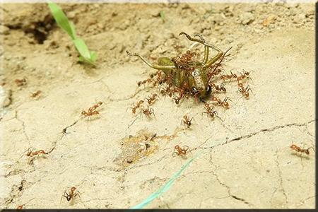 ✅¿qué-hacen-las-hormigas?