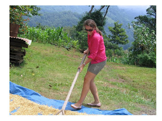 Volunteer working at coffee farm