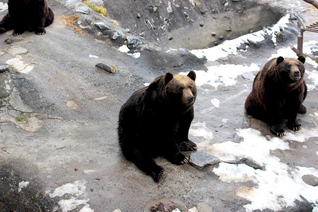 クマ牧場でヒグマのでかさを体感!これは死ぬな、、登別のクマ牧場【n】