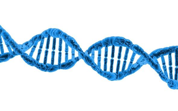 dna - chromosome - كروموسوم