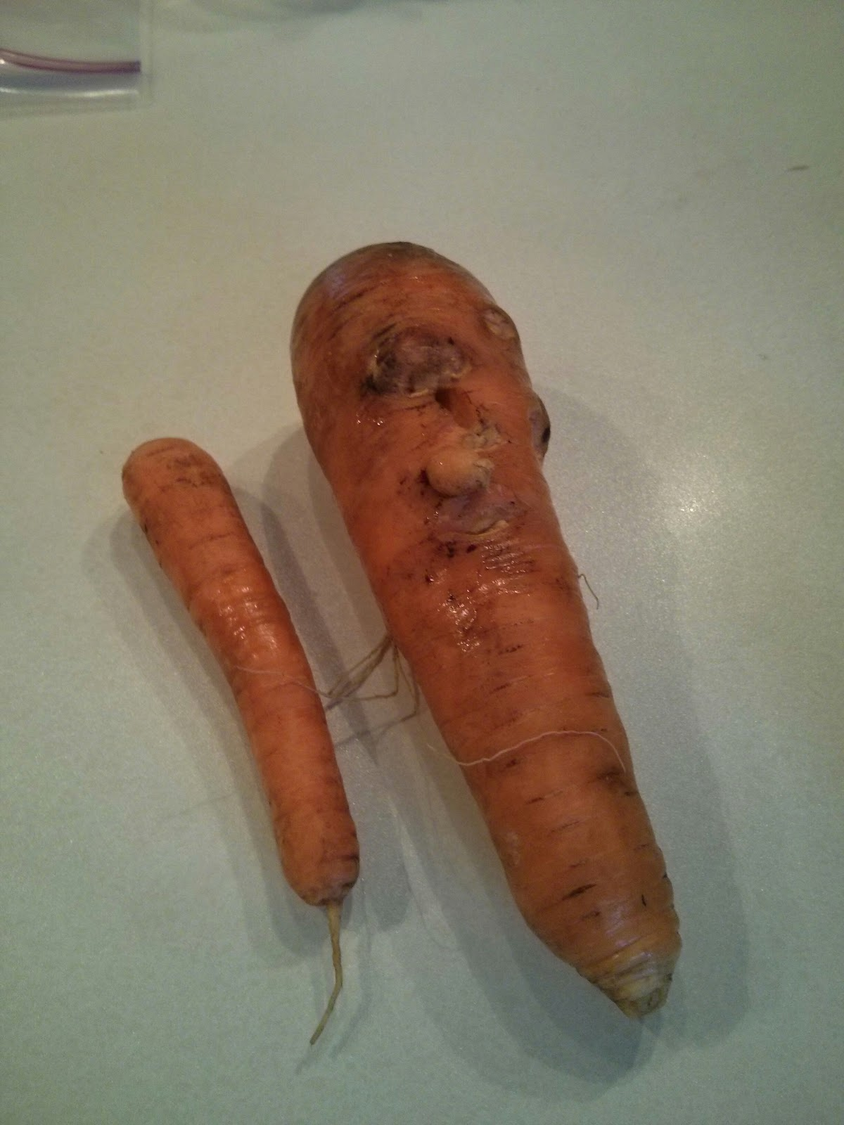 DUMB OLD HOUSEWIVES: Vegetable Oddities, continued.