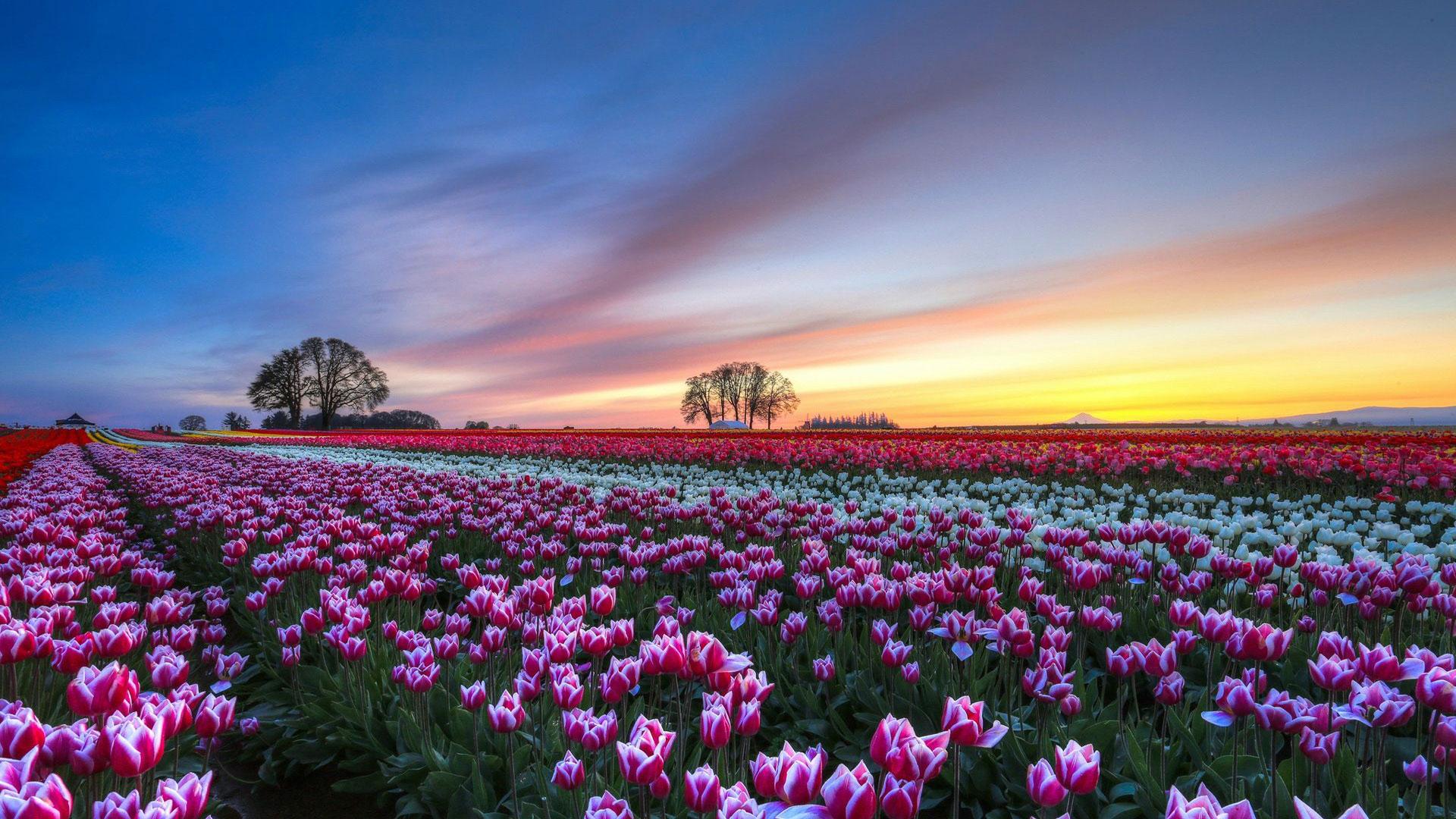 Plano De Fundo Full Hd: Papel De Parede Flores Da Primavera