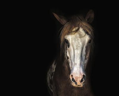 Gambar kuda hitam putih