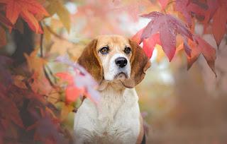 hayvan sevgisi ile ilgili yazılar, köpek sevgisi ile ilgili sözler, hayvanlarla ilgili sözler köpek, hayvanlarla ilgili dini sözler, kedi sevgisi ile ilgili sözler, hayvan sevgisi ile ilgili hadisler, hayvan sevgisi ile ilgili ingilizce sözler, hayvanlarla ilgili sözler köpek, enisten hayvanlarla ilgili sözler, hayvanlarla ilgili sözler ingilizce, hayvanlarla ilgili dini sözler, hayvanlarla ilgili sözler kedi, köpek sevgisi ile ilgili sözler,