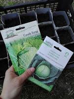 Programmare l'orto per l'estate: cosa seminare ad aprile.