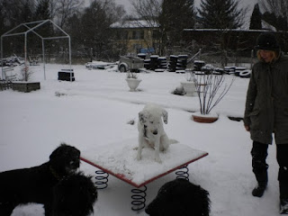 exercícios para cães