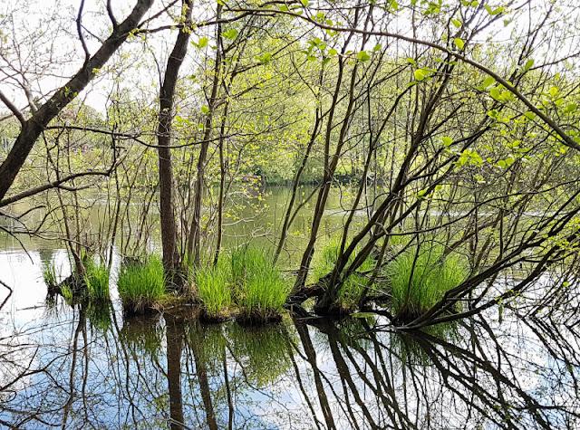 Küsten-Spaziergänge rund um Kiel, Teil 6: Der Rundweg um den Langsee. Beim Spaziergang hat man oft einen tollen Blick auf den See und die wunderschöne frühlingshafte Natur rundherum.