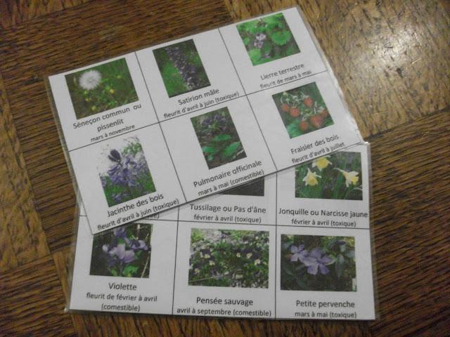 identifier fleurs printemps