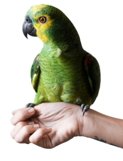 hand parrot png