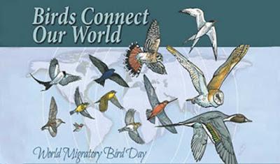 विश्व प्रवासी पक्षी दिवस