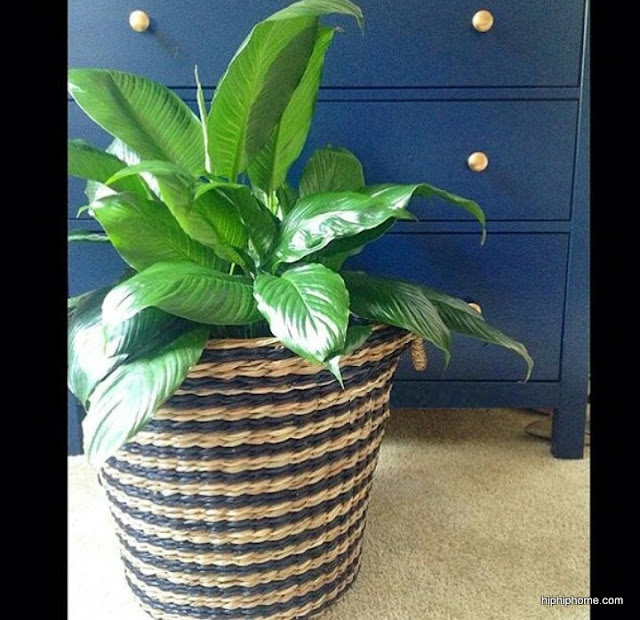 5 houseplants that are near impossible to kill 1