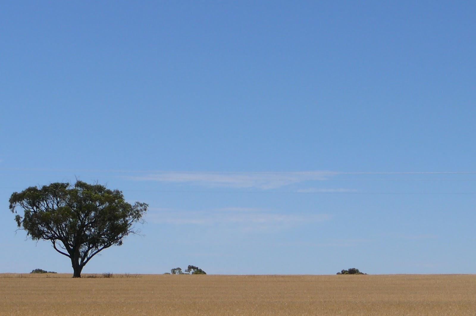 Western Australian wheatbelt