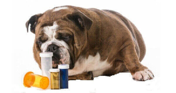 trazodone for dogs cost after surgery  how long to take effect nail trim flying  for thunderstorms dog overdose will trazodone put a dog to sleep dosage cost travel review  pain uk price uses how much with food