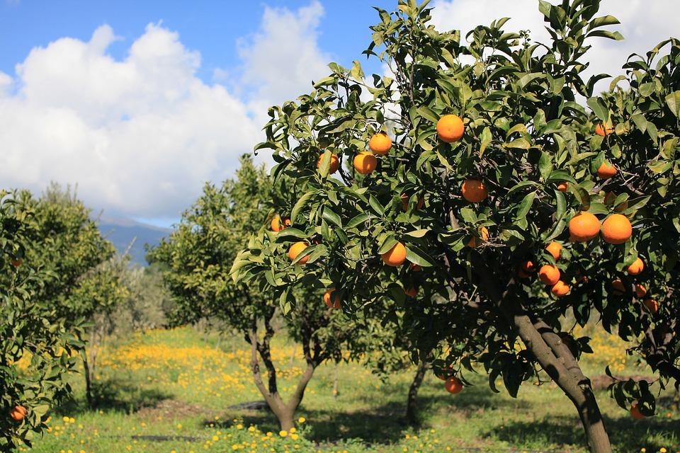 10 rboles frutales para el jard n amigos de la jardiner a for Arboles frutales de hoja perenne