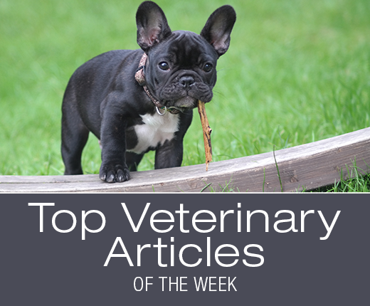 Top Veterinary Articles of the Week: Blastomycosis, Ear Problems, and more ...