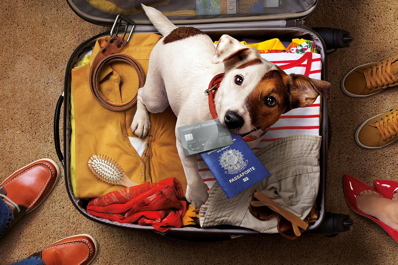 É possível viajar de avião com um animal de estimação?