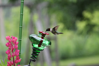 https://squareup.com/market/nestinteriors/mini-blossom-hummingbird-feeder-on-stake-from-par-a-sol