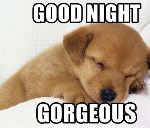 Good Night Gorgeous, Funny Dog Meme, Image