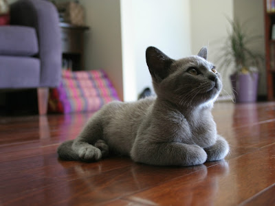 cat normal resolution hd wallpapers 27