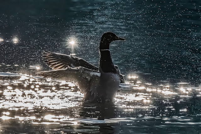 Ente im Gegenlicht © Chris Zintzen @ panAm productions 2021