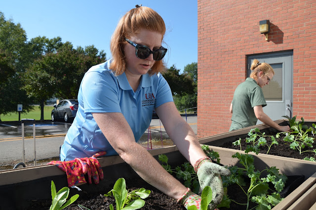 Two women plant small plants in garden bed.