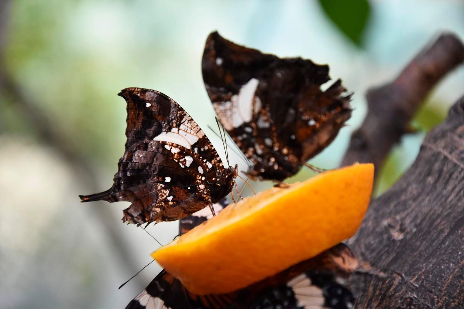 zdjecia motyli