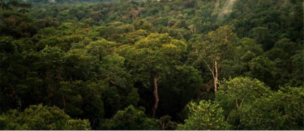 La natura selvaggia dell'Amazzonia in Brasile, dove Percy Fawcett ha condotto numerose spedizioni