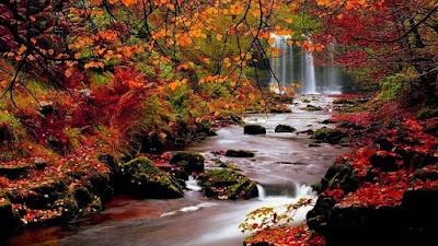 whatsapp dp nature, whts dp, dp images,