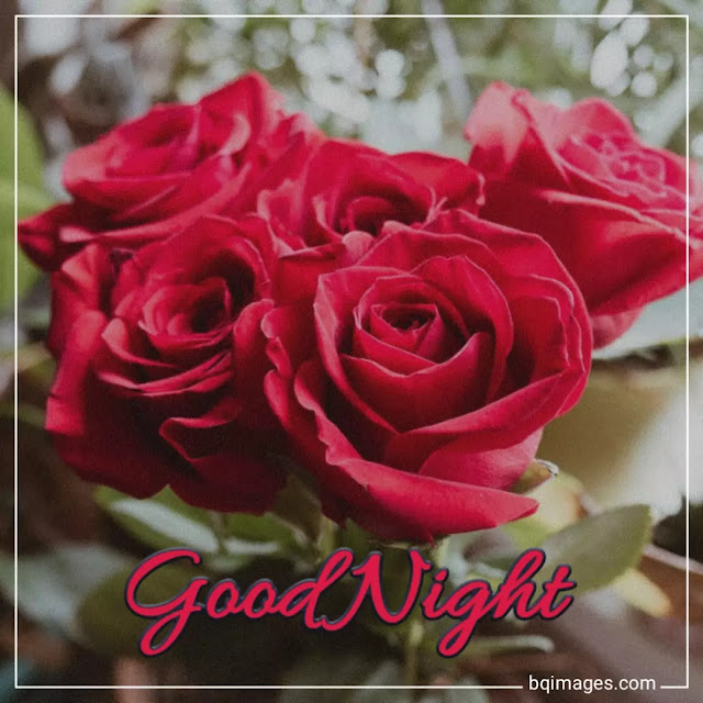 good night flowers images