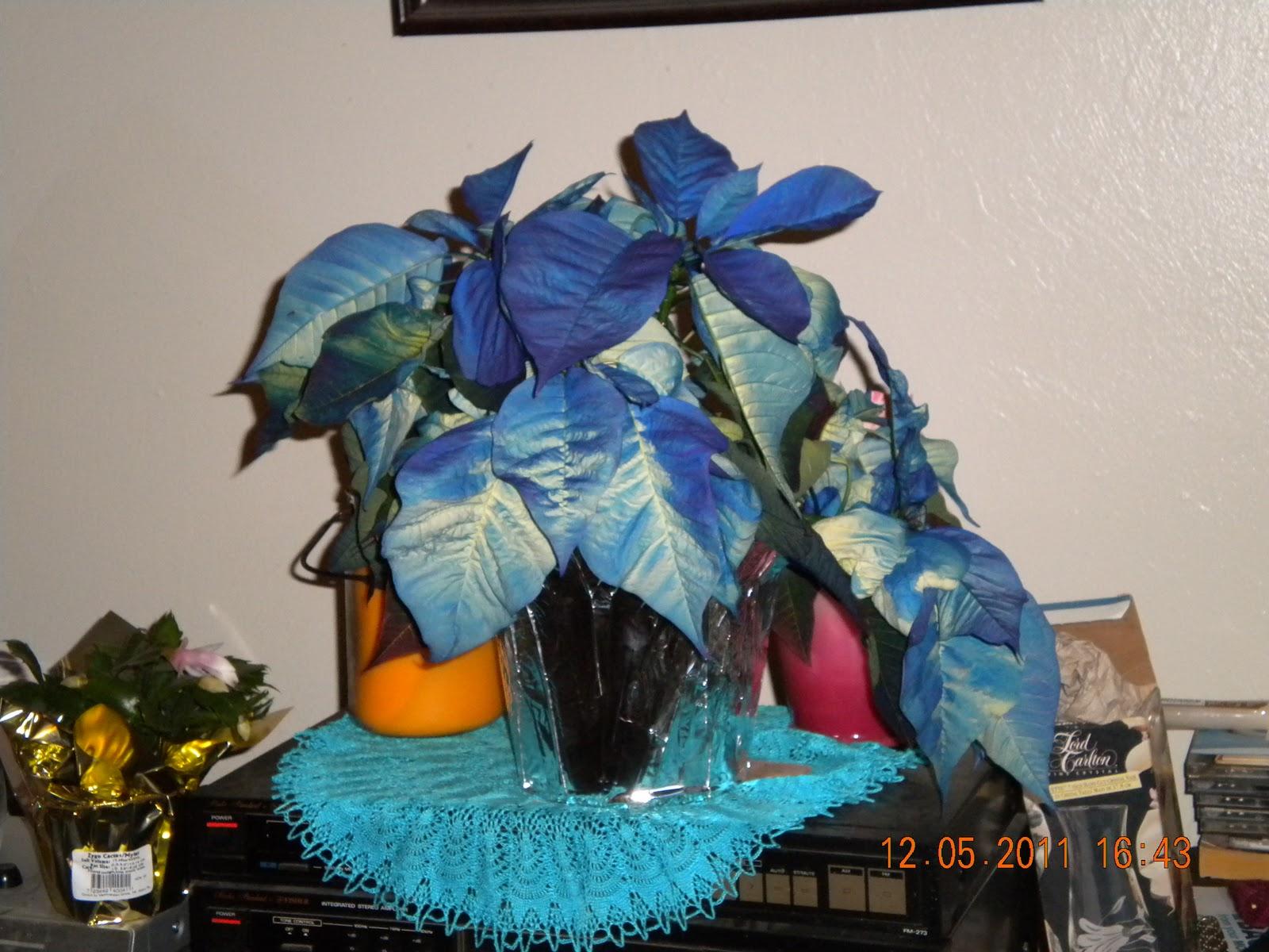 Knitting Kitties: December 2011