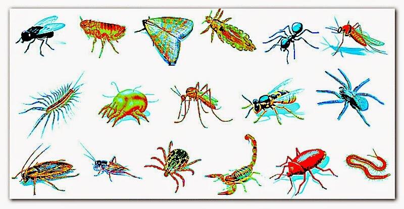 animales invertebrados sin protección corporal