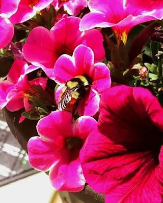 may, day, gardening, crafting, decorating, maker,