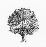 Oak Tree stipple illustration by Rachel M Scott