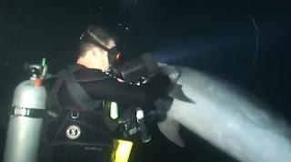 Ένα τραυματίσμένο δελφίνι πλησίασε έναν δύτη για βοήθεια. Δείτε τι ακολούθησε!