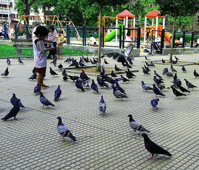 Niño dando de comer a palomas en el parque