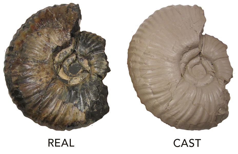 Natural Selection And Fossils - Lessons - Tes Teach