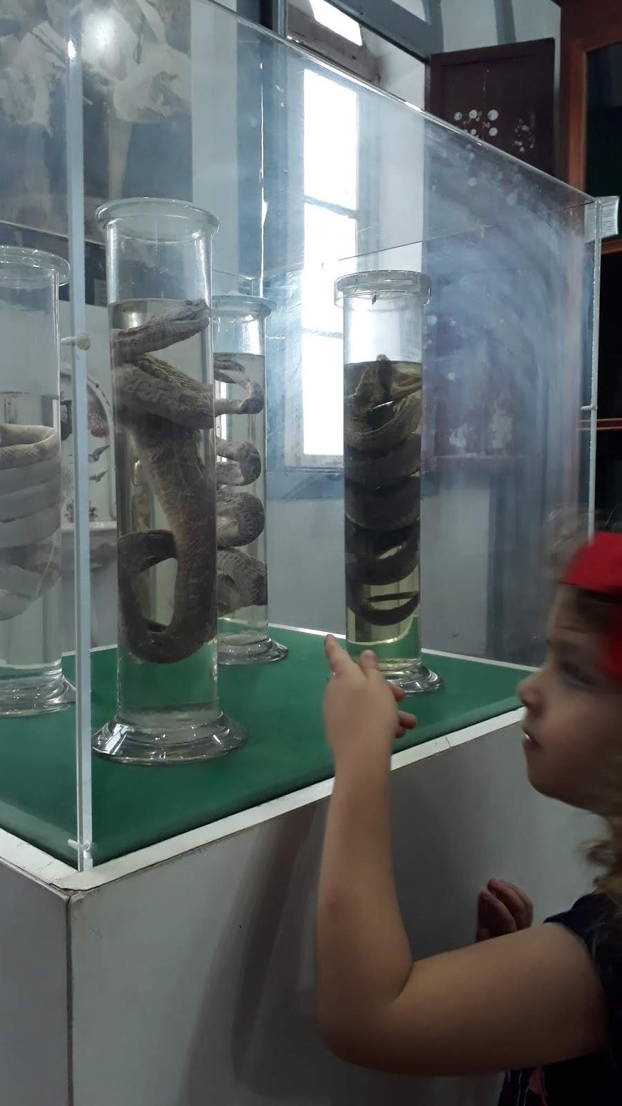 Animais peçonhentos em solução de formol - Museu da Farmácia UFOP