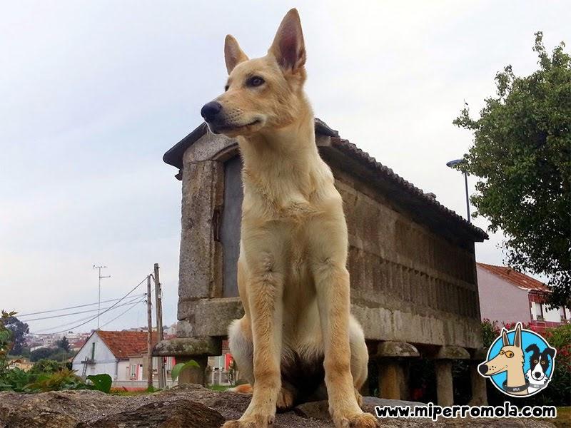 Can de Palleiro frente a un Hórreo típico de Galicia