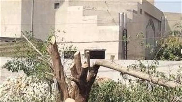 امانة بغداد: سنحاسب اي شخص يقطع شجرة بشكل جائر لمنافع شخصية