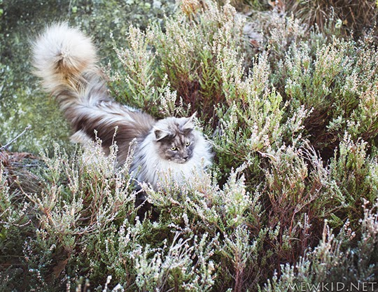 cat sitting in bushes