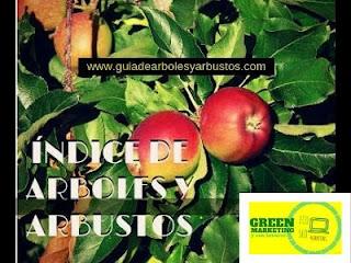 Arboles y Arbustos, plataforma de contenidos de ECO SEO Green Marketing