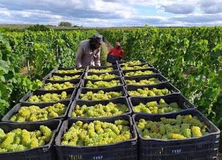 Vinho baiano produzido na Chapada Diamantina ganha prêmio nacional