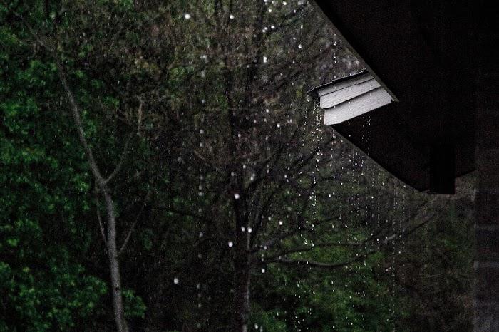 Diaromatik Bau Hujan
