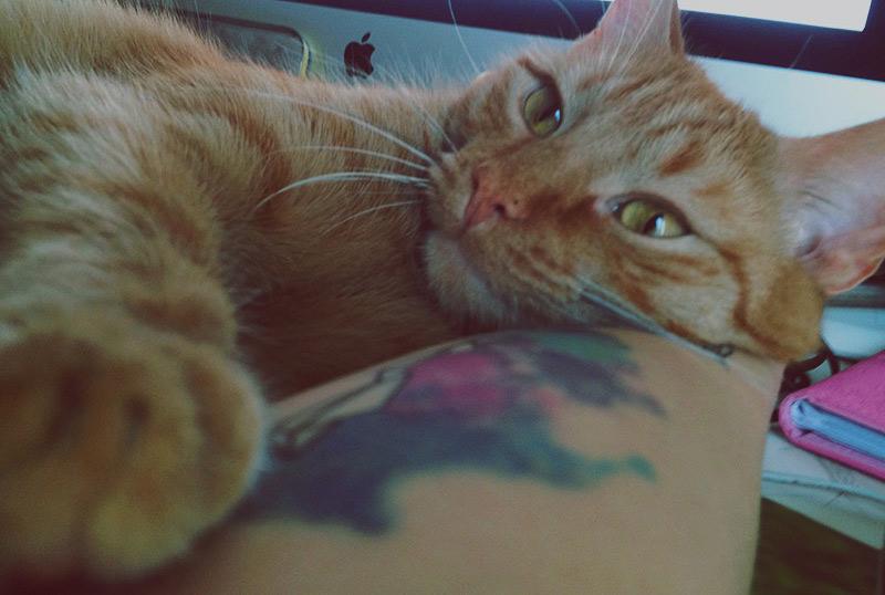 KuneCoco • Schnurrberts Jubiläum • Katzen wollen schmusen!