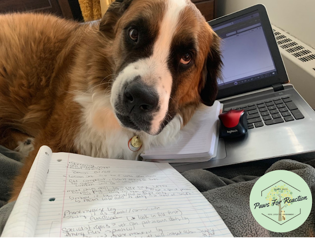 Hanging with Hazel: The ups and downs of working from home