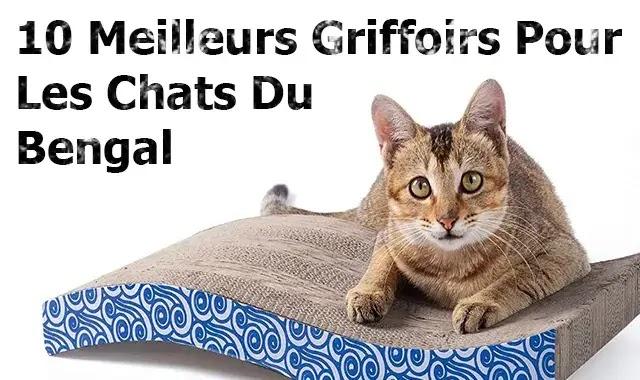10 Meilleurs Griffoirs Pour Les Chats Du Bengal