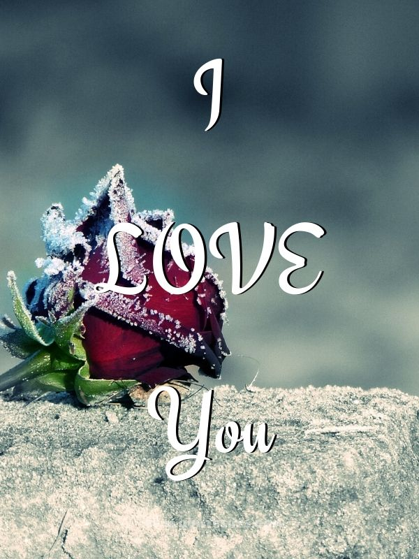 I Love You Images with Red Cold Freeze Rose