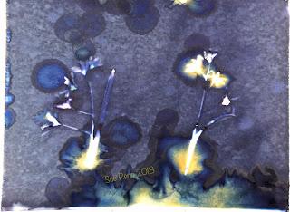 Wet Cyanotype_Sue Reno_Image 299