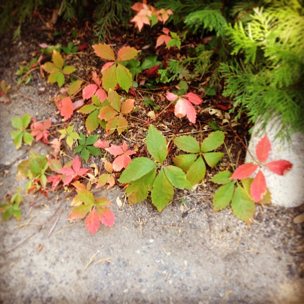 leaves changing, fall