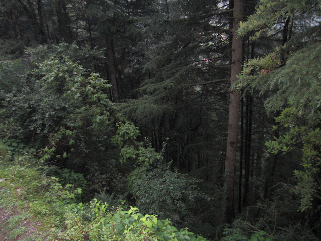 forest on road side